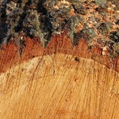 Felled timber