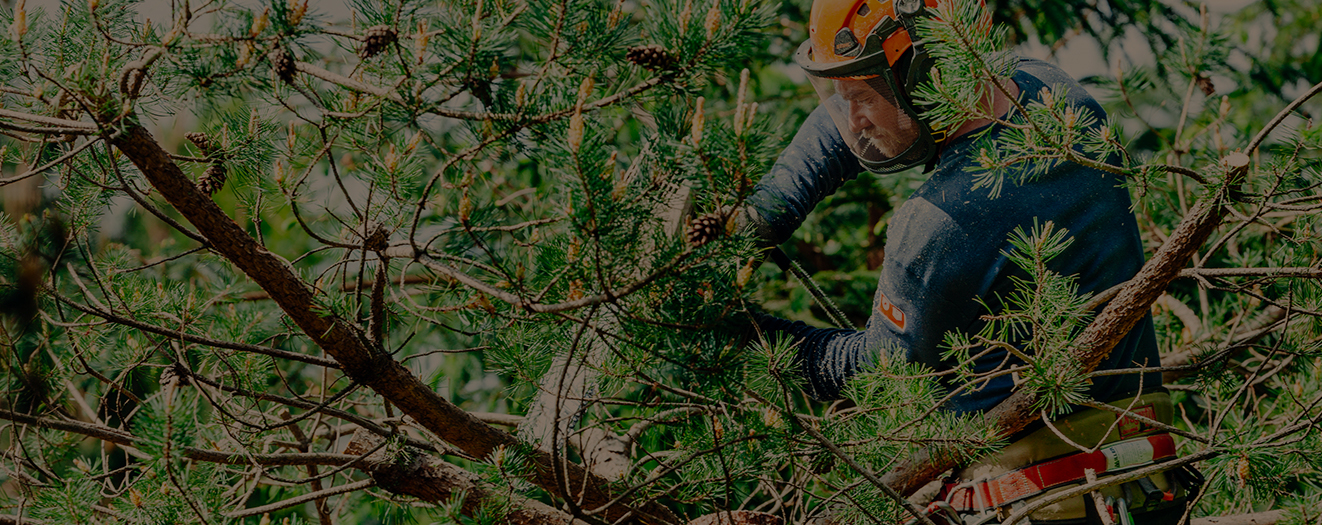 Heritage tree services using an environmentally sound approach